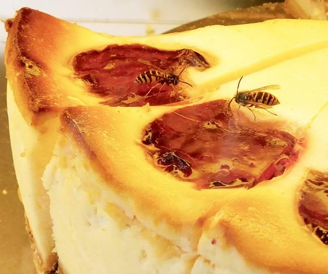 Kuchen Wespen