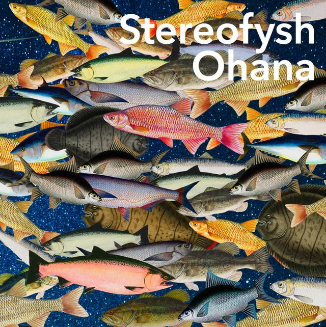 Stereofysh 2017