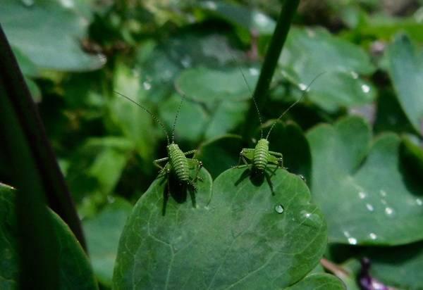Liebe Paar Natur Grashüpfer Garten Ökologie
