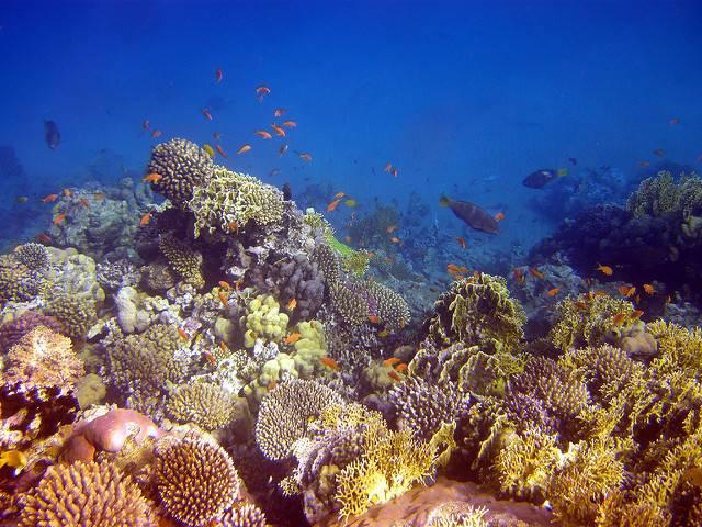 Vielfalt am Riff