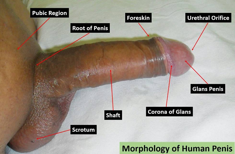 Brasilianische Pornoröhren