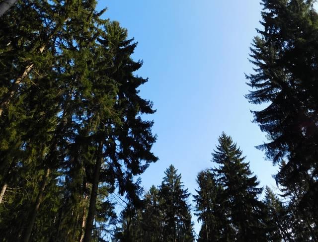 Wald, Foto: M. Rädel