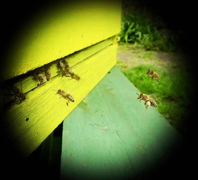 Bienen Imkerei