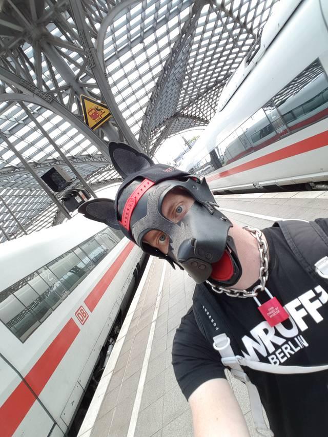 Finn Puppy Germany