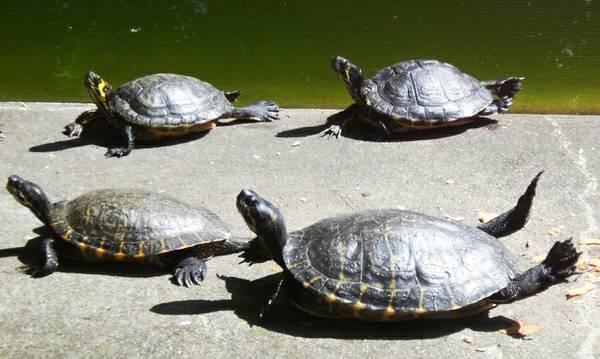 Schildkröten Urwald Dschungel