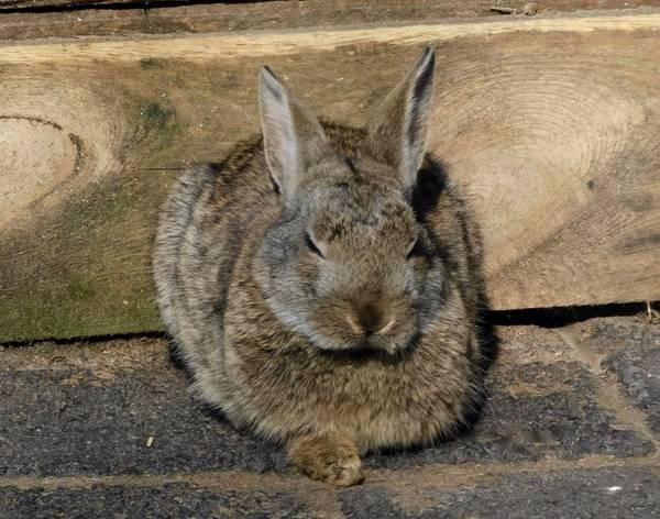 Kaninchen Ostern
