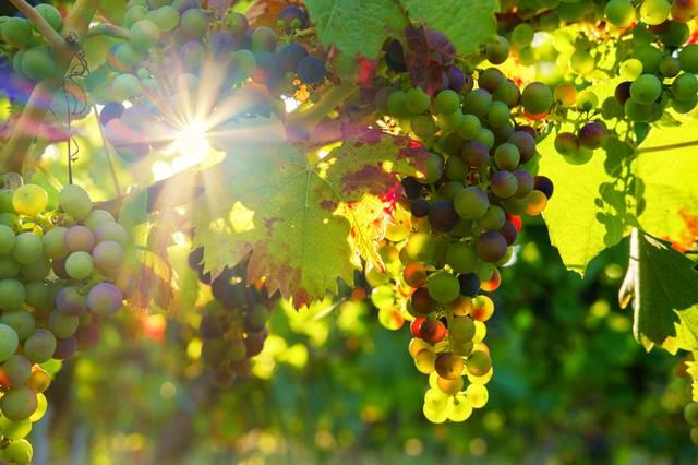 Weinbars München