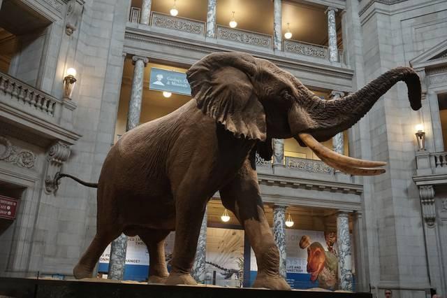 Museum of Natural History Washington
