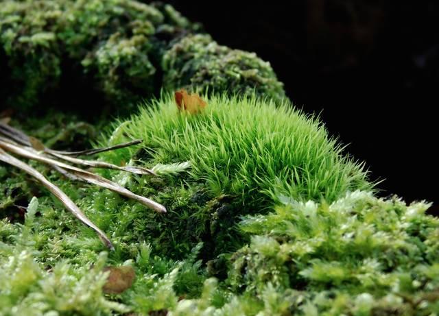 Moos Natur Wald