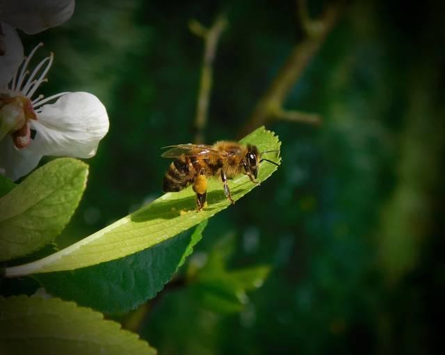 Biene Natur Honig