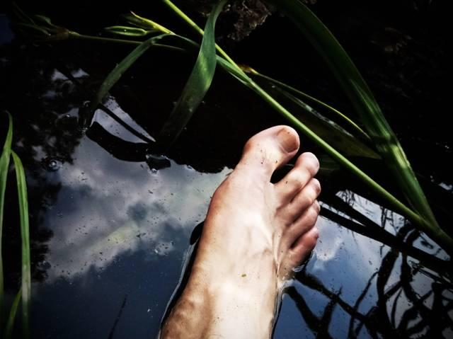 Wasser, Natur, baden, Ökologie