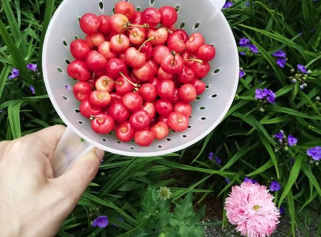 Sommer, Garten
