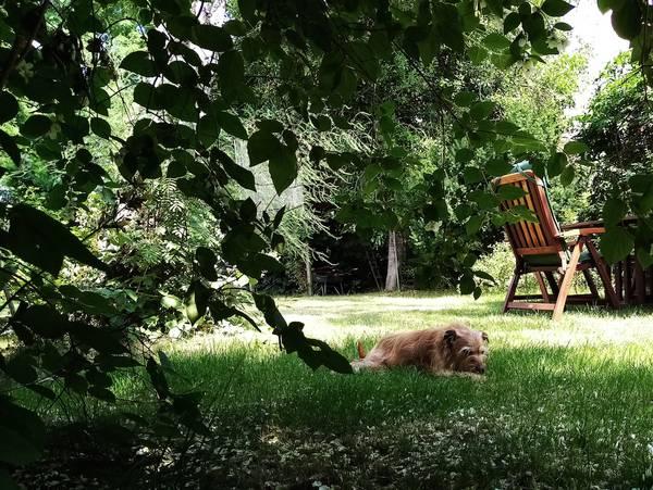 Sommer, Garten, Hund