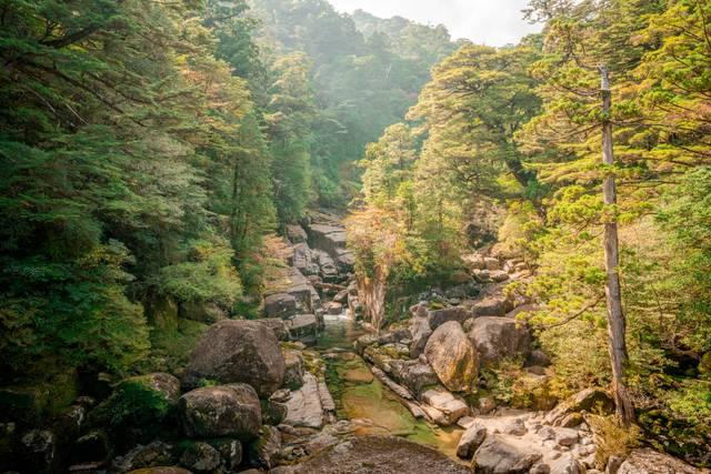 Japan Waldbaden