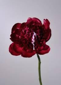 Peter Schmid - Sticky Flowers.jpg