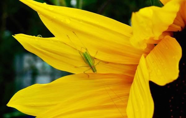 Sommer, Garten, Natur
