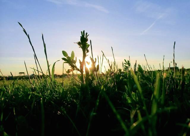 Gras Tempelhofer Feld