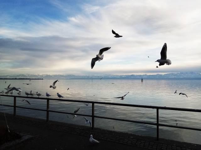 Möwen, Ufer, Bodensee, Spaziergang