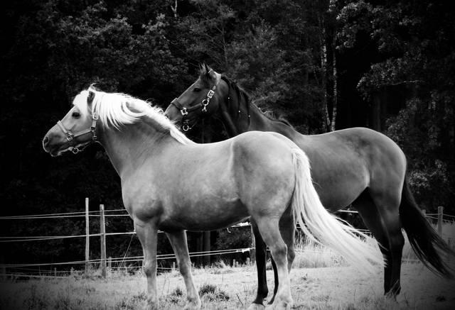 Pferde, Natur