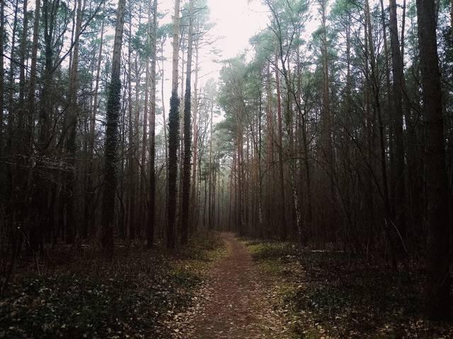 Wald, Natur, Shinrin Yoku