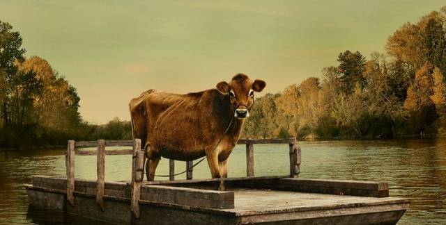 Kuh, Natur
