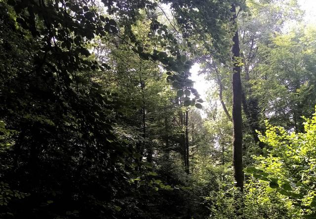 Naturnaher Laubmischwald