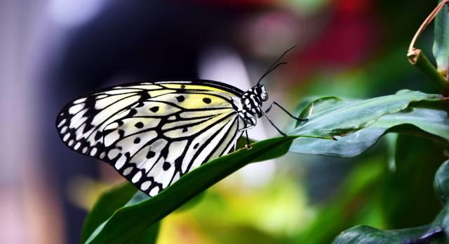 Sympathische Schmetterlinge